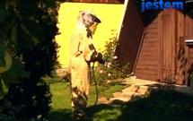 Jak pozbyć się gniazda os w ogrodzie - sprawdzone sposób na osy