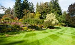 Zakładanie trawnika krok po kroku. Sianie trawy, nawożenie, podlewanie, koszenie trawnika [PORADNIK]