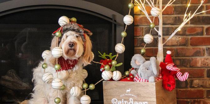 Jak udekorować dom na święta Bożego Narodzenia - POMYSŁY, INSPIRACJE