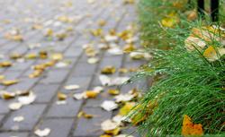 Mycie, czyszczenie i konserwacja kostki brukowej, czyli jak dbać o nią jesienią i zimą