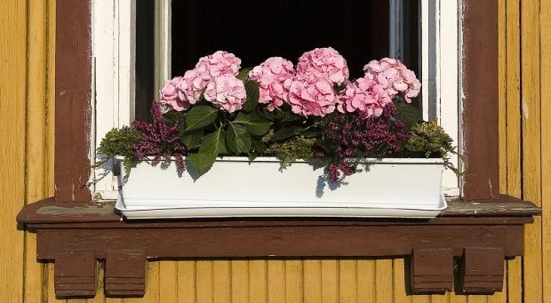 Hortensje - kwiaty w skrzynkach