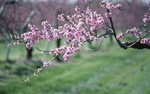 Ogród wiosną, czyli sadzenie bylin, pielęgnacja trawnika, porządki w ogrodzie