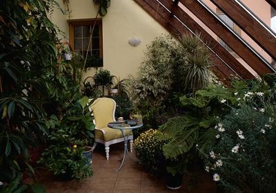 Rośliny i kwiaty do ogrodu zimowego