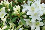 Białe kwiaty ogrodowe. Naturalna aranżacja ogrodu w bieli