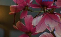 Kwiaty, róż i metal. Pomysł na pokój dla dziewczyny